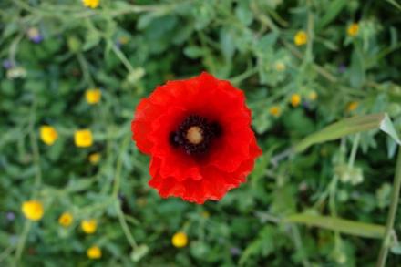 Flowers (2/3)
